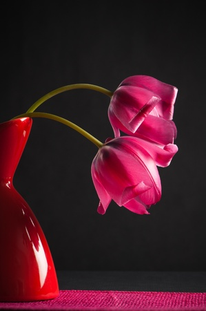 pink tulips in a vase on a black background photo