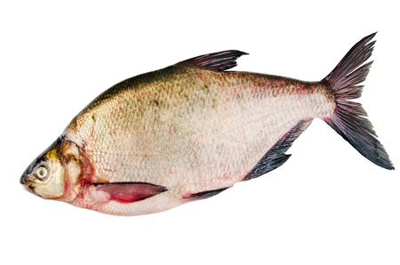 Bream is isolated on a white background Stock Photo - 18115727