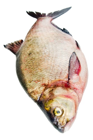 Bream est� aislado en un fondo blanco photo