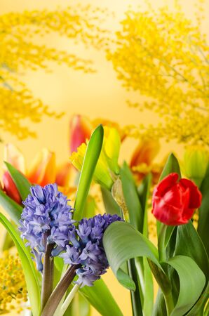 Spring bouquet with a mimosa and tulips Stock Photo - 18386533