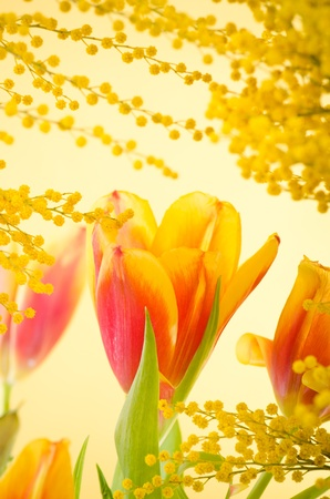 Spring bouquet with a mimosa and tulips Stock Photo - 18386558