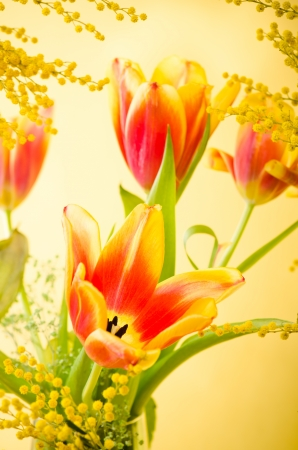 Spring bouquet with a mimosa and tulips photo