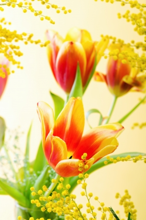 Spring bouquet with a mimosa and tulips Stock Photo - 18386546