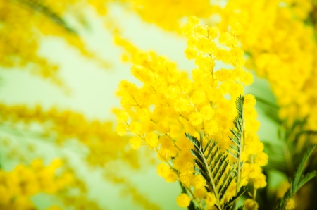 Spring bouquet with a mimosa Stock Photo - 18386555