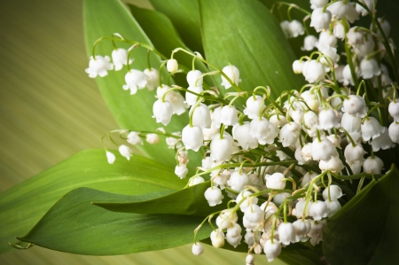 Lilies of the valley, close up photo