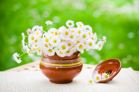 ronantic: Bouquet of delicate daisies in a pot at the table