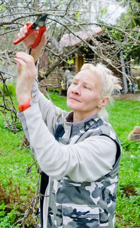 Woman cuts a branch at an Apple-tree, a spring in the garden photo