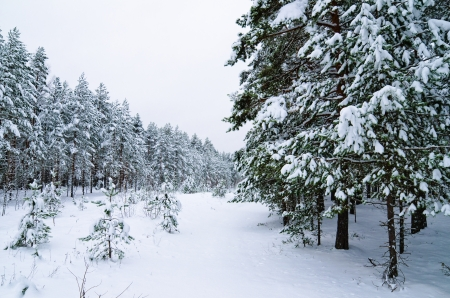 snowbound: Winter landscape in the forest snowbound Stock Photo