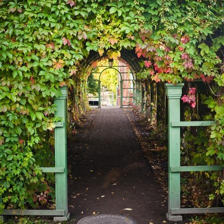 streifzug: Zweigstellen von wildem Wein Wanderung am Torbogen Lizenzfreie Bilder