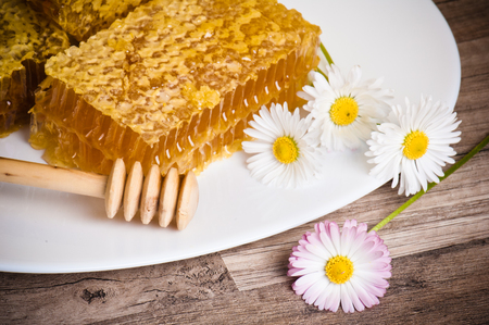 honeycomb with daisies on white plate photo