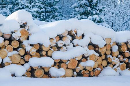 snowdrifts: The cut logs in a winter wood under snowdrifts