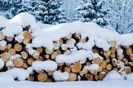 snowdrifts: Cut logs in a winter wood under snowdrifts