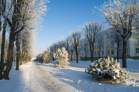 A beautiful city park with trees covered with hoarfrost photo