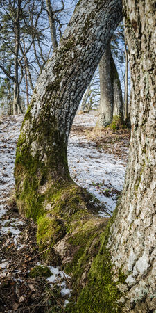 coalesce: Spring landscape in wood Stock Photo