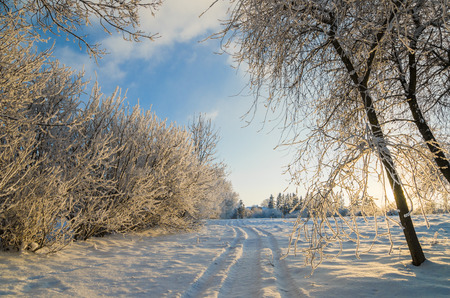 trees covered with hoarfrost against the blue sky photo