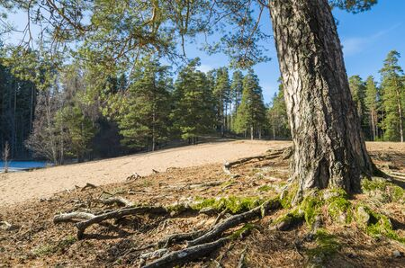 coalesce: Spring landscape in a Baltic wood