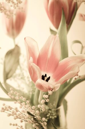 Spring bouquet with a mimosa and tulips. Toning photo