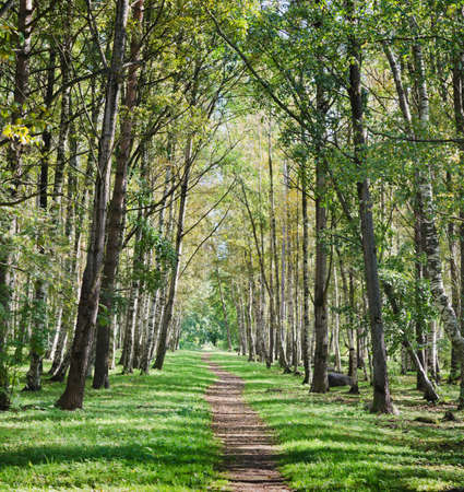 shined: The deserted avenue shined by solar beams in autumn park