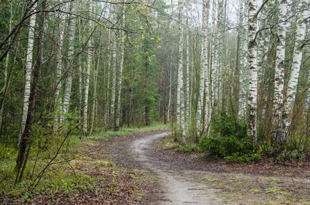 paisaje de primavera de niebla con sendero en el bosque Foto de archivo