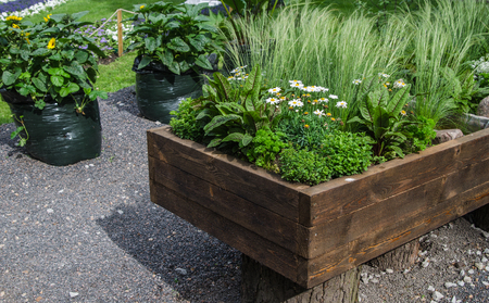grown up: A variety of plants and vegetables grown in a wooden box, close up