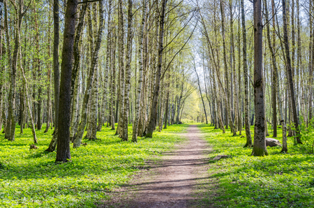 shined: The deserted alley shined by solar beams in spring park Stock Photo