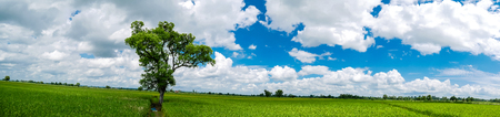 Panorama Landscape. The shade big tree standing in the green rice field with the fresh green bushes as the background in the good day of blue sky and white cloud. Phitsanulok, Thailand.