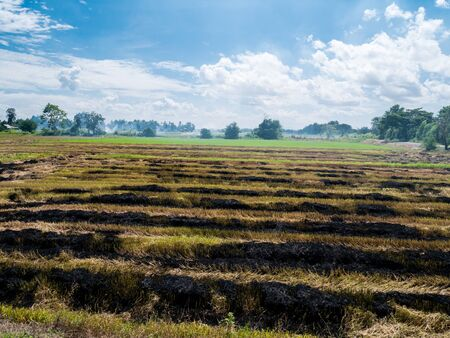 Burning straw in rice plantation one cause to global warming.