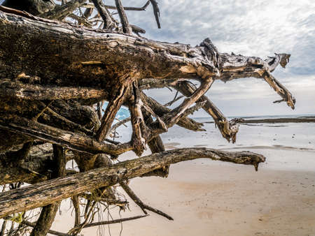 Driftwood on sandy beach at Nai Yang Beach ,Sirinath National Park near Phuket International Airport ,Phuket ,Thailand. Stock Photo