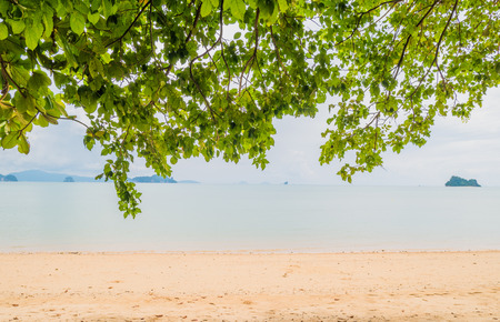 Tree leaves over luxury beach. Located Yao Noi Island. Peaceful life at Koh Yao Noi, Phang Nga, Thailand.