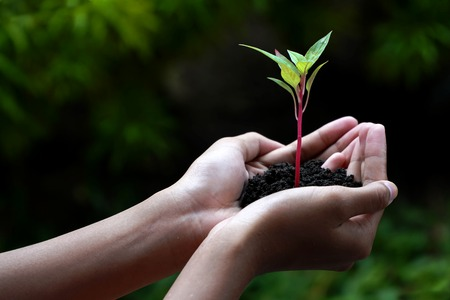 Human Hands Holding Green Plant With Soil Over Nature Background Stok Fotoğraf