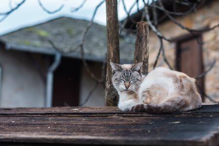 kitten sleeping on wooden plank with unfocused background