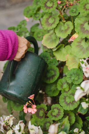 mayo woman hands watering flowers at home Фото со стока