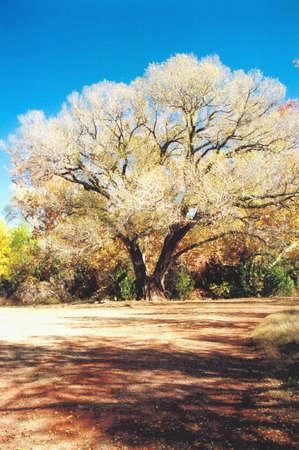 Wedding Union Tree photo