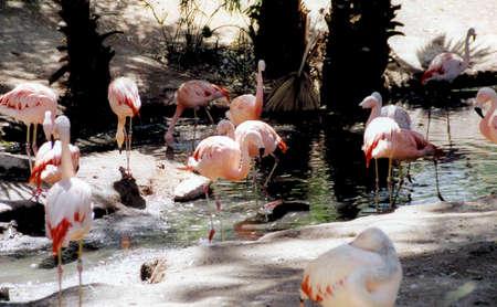 Flamingos Stock fotó