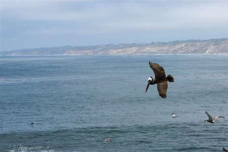Bird In Flight Stock fotó