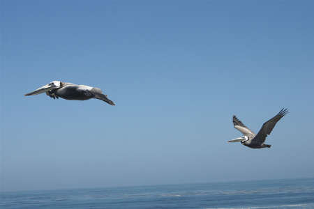 Birds In Flight Stock fotó