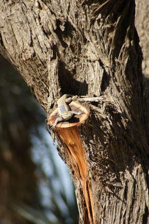Lizard on a Tree Stock fotó