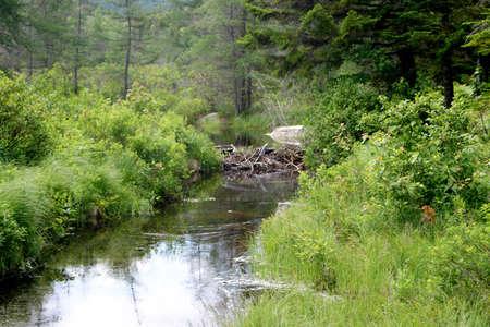 River Stream in New Hampshire