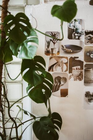 workroom: Beautiful decorated wall with photos of ceramic ware and big green plant on foreground