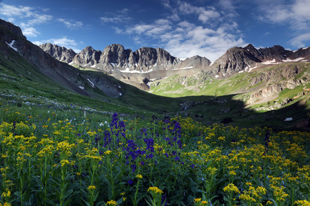 Summer wildflowers high up in the Colorado Rocky Mountains near Lake City, Co.  American Basin is off Cinnamon Pass Road on the Alpine Loop Scenic Byway in the San Juan Mountains.