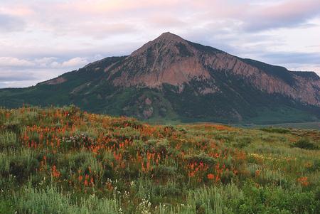 インド ペイント ブラシと山クレステットビュッテに近いトキ ビュート, コロラド州