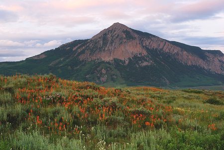 Indian Paint brush and Mt. Crested Butte near Crested Butte, CO