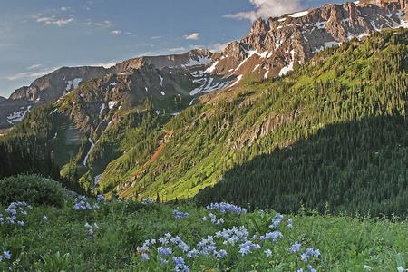 Colorado summerat Yankee Boy Basin  in the San Juan Mountains