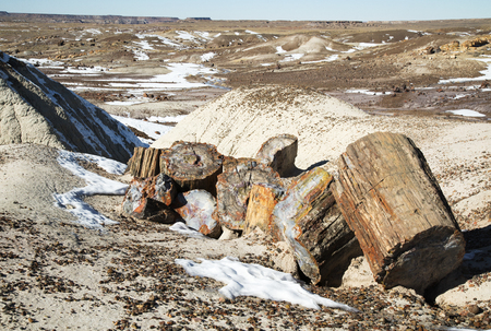 Petrified Log atop a Hardened Dune at Petrified Forest National Park