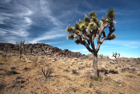 View of the Mojave Desert from Joshua Tree National Park