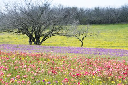 Wildflowers at a ranch in Texas