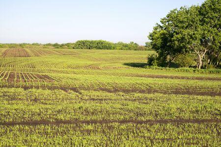 Farm field in Kansas during spring.