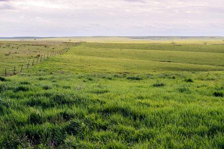 Green pasture land in the Flint Hills of Kansas