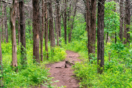 A pathway snaking through the forest