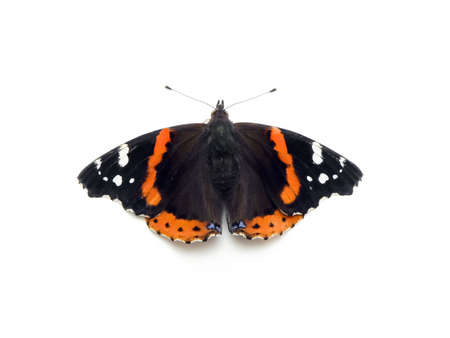admiral: Red admiral butterfly isolated on a white background Stock Photo